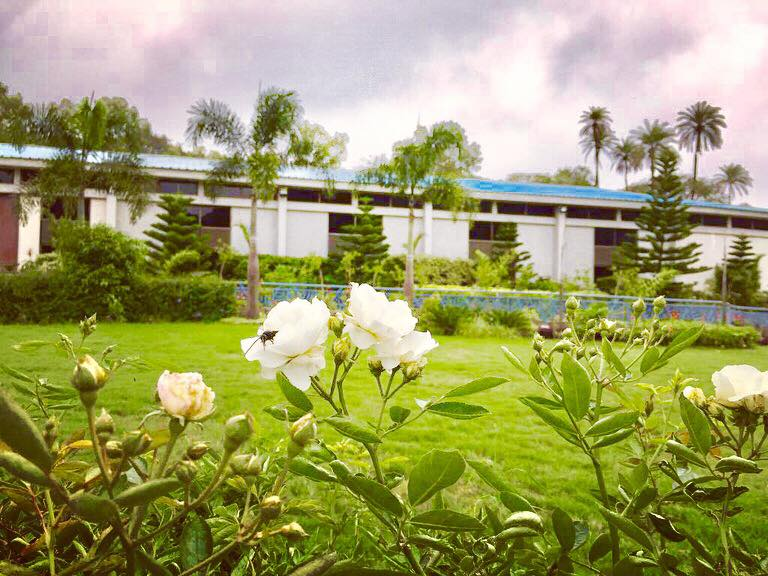 white flower- hummingbird Resort