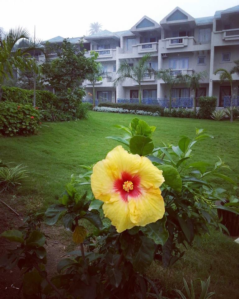 Yellow Flower- Hummingbird Resort